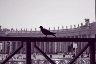 Il colonnato, il pennuto e lo steccato - Luigi Damiano